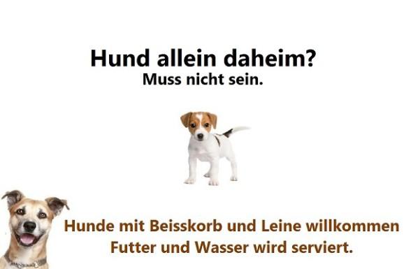 100% Hundefreundlich Testsieger 2017 Goldankauf Graz
