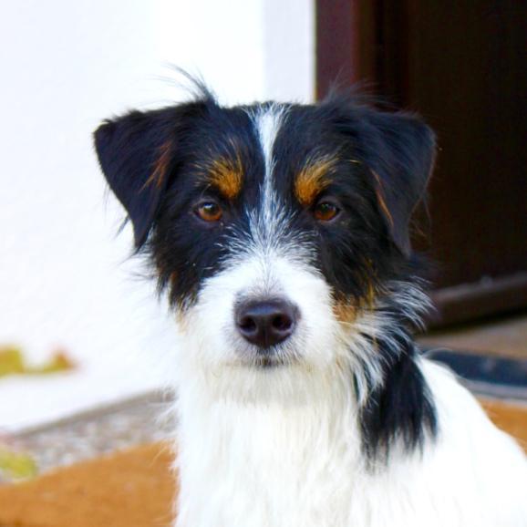 Hundefreundlicher Betrieb Graz